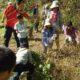 挑戦!亜麻(あま)の収穫体験in北あいき