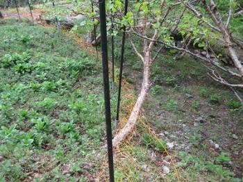 左側:柵で守っているエリア 右側:柵の外側
