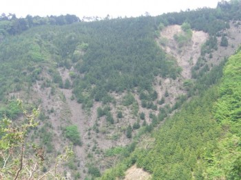 飯田 植生食害による森林の表土流出