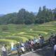 よこね田んぼの稲刈りイベントに参加しました!