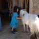 「命の牧場」とホースセラピー